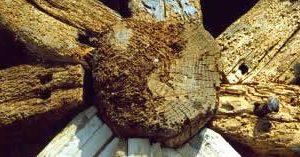 consol-consolidante-per-legno-indurisce-e-rinforza-il-legno-deteriorato
